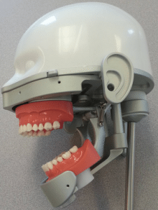 Dental mannequin with plastic head portion