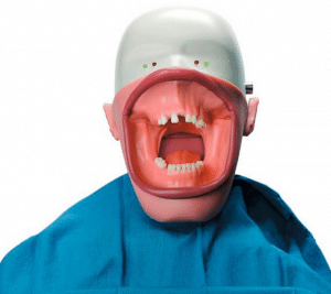 Dental Mannequin